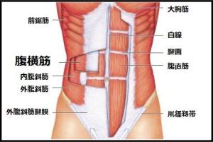 abdominis