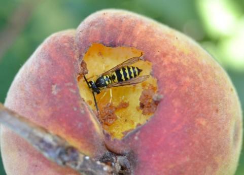 覚えておきたいハチに遭遇したときの対処法
