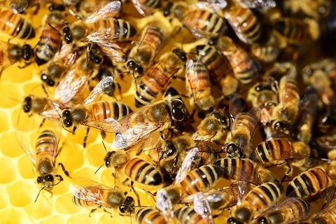 危険なアナフィラキシー!正しい蜂の対処法