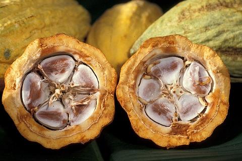 「チョコ」は発酵食品!!その健康効果に迫る