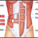 腹筋インナーマッスルは腹横筋と腹斜筋