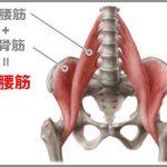 大腰筋と腸骨筋で腸腰筋と呼ばれる