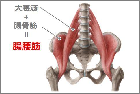 腸腰筋ストレッチで腰痛が改善するメカニズム