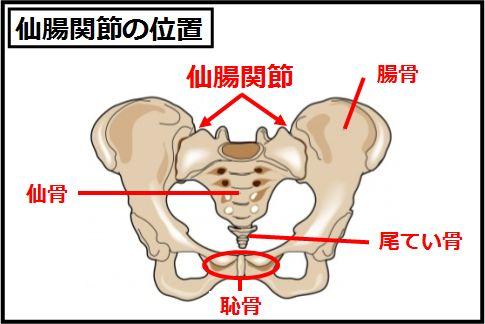 腰痛の原因「仙腸関節」の位置
