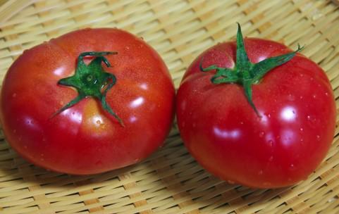 リコピン効果はトマトの完熟度で違う