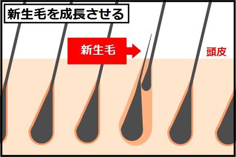 「神様シャンプー」は新生毛を成長させるシャンプー法