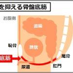 骨盤底筋の低下が尿漏れの原因