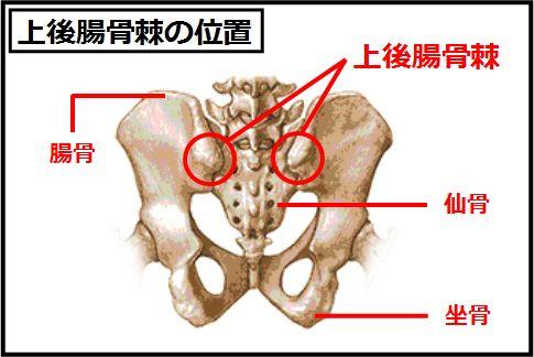 仙腸関節の機能障害が腰痛の本当の原因だった