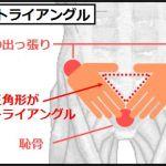 大腰筋の鍛えるための骨盤トライアングル