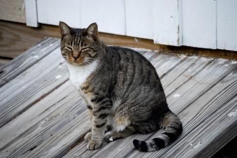 広背筋ストレッチで猫背の肩こりを解消する